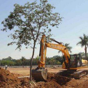 O que é replantio de árvores ou transplante de árvores?